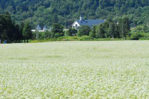 2009ほろかないフォトコンテスト奨励賞作品 『ルオントとそば畑』 - 大竹 明男(千葉県富里市)